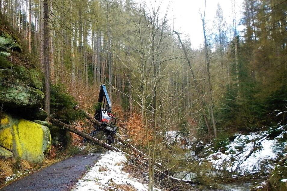 Mit Harvestern lässt der Nationalpark Wege freischneiden. Nur in den Kabinen sind die Forstarbeiter vor stürzenden Bäumen geschützt.