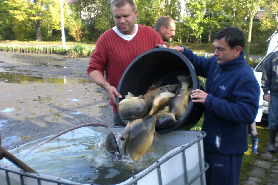 In Seeligstadt bewirtschaftet der Sportverein seit 42 Jahren den Teich. Das traditionelle Abfischen im Herbst gehört dazu.