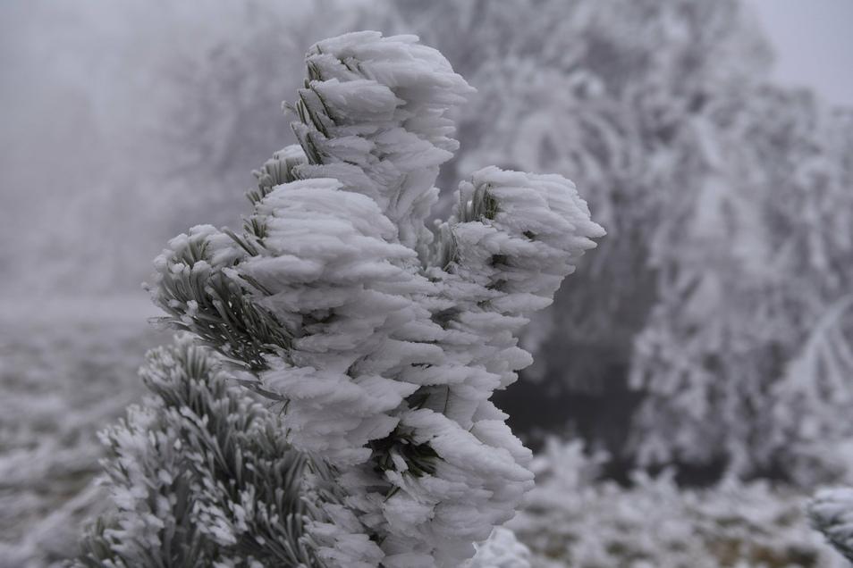 Wie hier in Zinnwald verwandelte dicker Raureif in bizarren Formen die Landschaft. Bäume und Sträucher ächzten unter der Last des Eises.