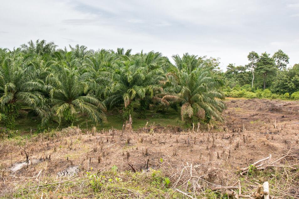 Für mehr Ressourcen, muss mehr Regenwald abgeholzt oder abgebrannt werden. Die CO2-Emissionen treiben dir Klimaerwärmung weiter voran.