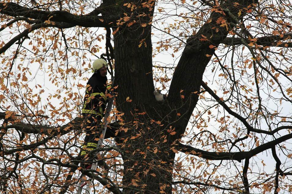 Zum Greifen nah und doch nicht gerettet: die Katze auf dem Baum an der Hartmannstraße.