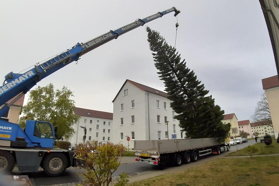 Montagmorgen begann die Aktion Weihnachtsbaum in Görlitz.