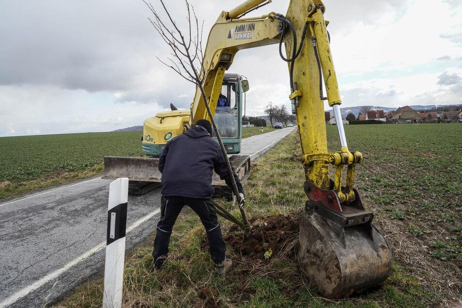 Vom Sterbegeld ihres Vaters hat Kerstin Mickan mit 50 Bäumen eine alte Allee in Drauschkowitz wieder aufgefüllt. Da die Bäume zu nah am Straßenrand standen, setzte das Landratsamt nach einem Jahr ihre Umpflanzung durch. Am 5. März gruben sie und ihre Helf
