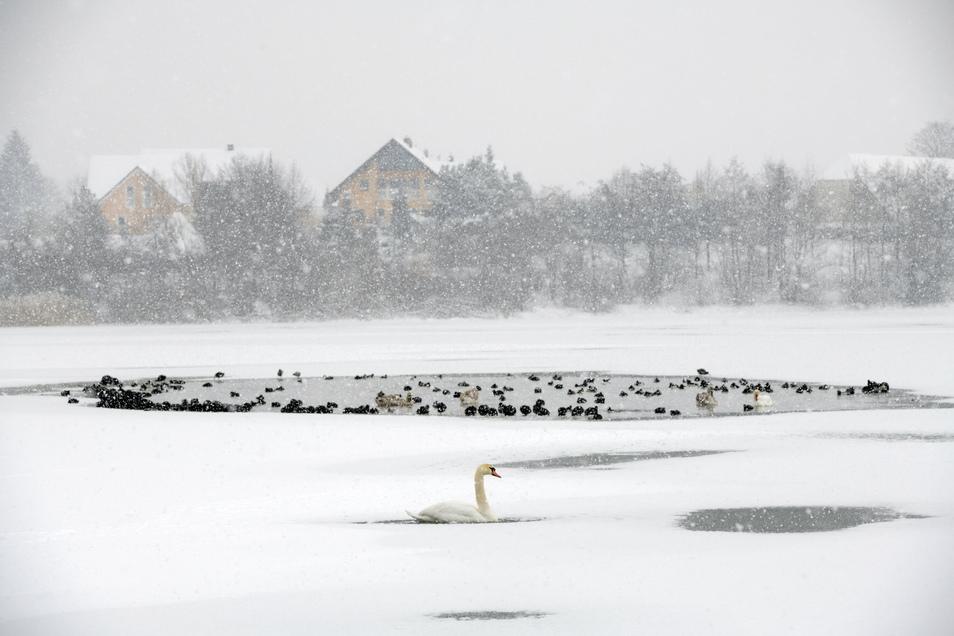 Der Olbersdorfer See friert zu. Vor dem Betreten des Eises wird aber tunlichst gewarnt.