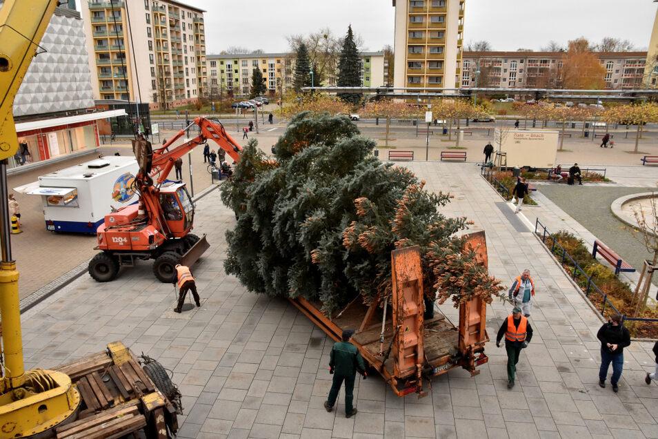 Am Dienstagnachmittag wurde der Weihnachtsbaum auf dem Lausitzer Platz aufgebaut. Kurz zuvor war er in der Lilienthalstraße gefällt worden.