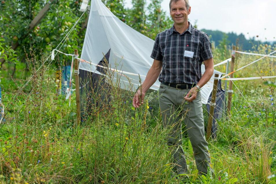 Vor den Apfelbäumen und der Insektenfalle blühen Wilde Möhre und Königskerze: Anbauberater Olaf Krieghoff weiß, dass nützliche Insekten in den Blühstreifen überwintern. Auf Chemie will er auch nicht verzichten.