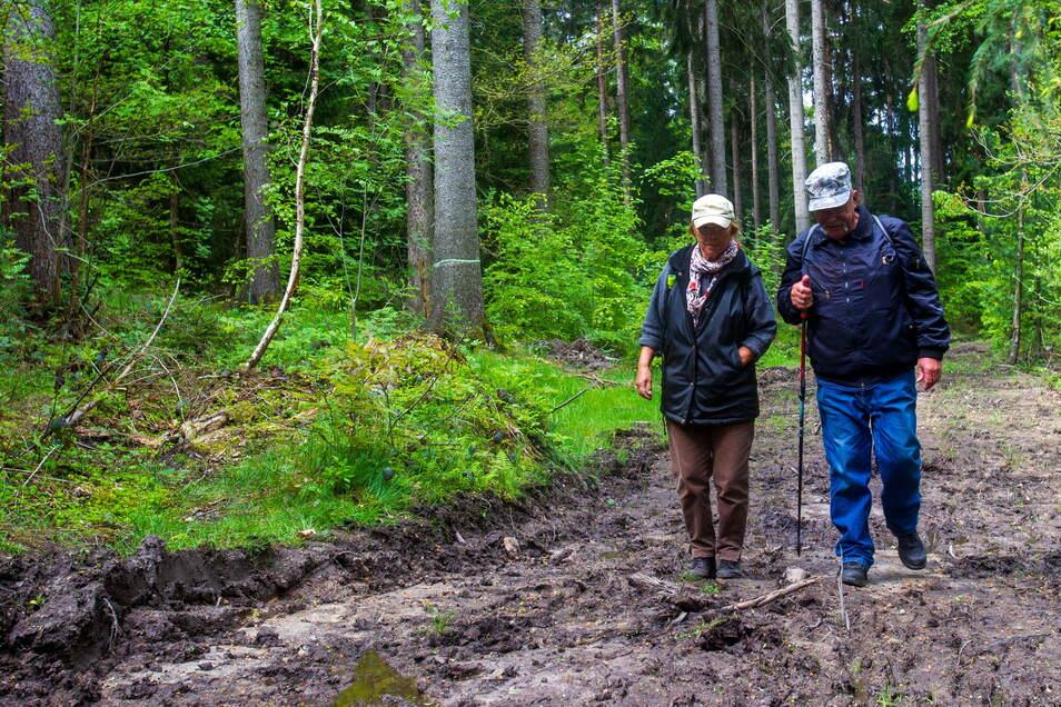 """""""Traurig, wie es hier aussieht."""" Brigitte und Lutz Schönberger aus Wilsdruff wandern auf schlammigen Wegen im Tharandter Wald. Hier wurden zuvor Käferbäume mit schwerer Technik gefällt."""