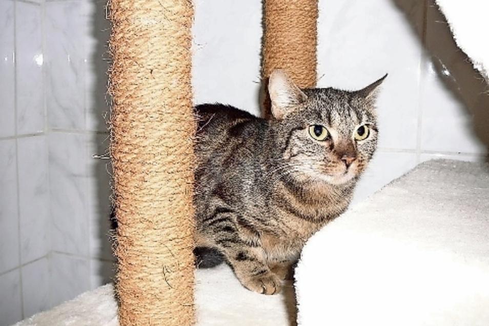Raya ist eine der fünf Katzen, die in einer Heidenauer Wohnung zurückgelassen wurden.