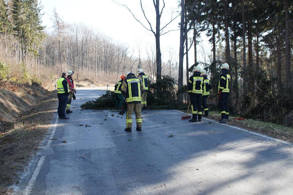 Etwa 20 Minuten brauchten die Kameraden, um den Baum zu beseitigen und die Kammstraße zu reinigen.