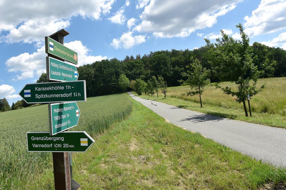 Die Fichten auf Großschönaus Hutberg sind tot. Der Wald soll hier noch einmal von vorn wachsen.
