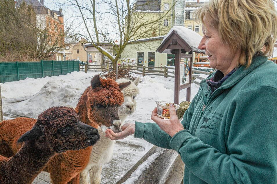 Tierparkleiterin Silvia Berger füttert die Alpakas Bruno, Nesquik und Flocke. Besucher dürfen aufgrund der aktuellen Corona-Regeln derzeit nicht in den kleinsten Zoo Sachsens.