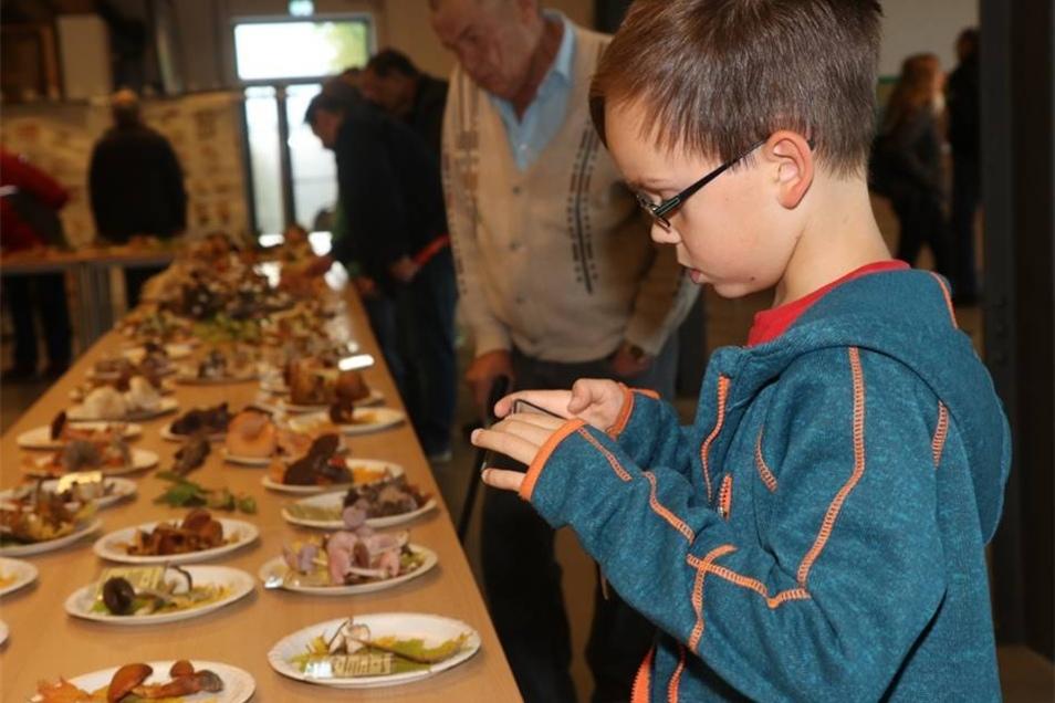 Der kleine Emilio Fröde aus Neugersdorf, selbst ein begeisterter Pilzsammler, hält die ausgestellten Exponate gleich auf seinem Handy fest.