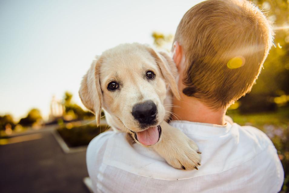 Haustiere bereiten große Freude, benötigen aber auch viel Zuwendung und Aufmerksamkeit.