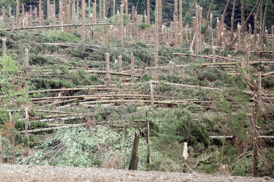 Umgeknickte Bäume liegen nach einem Sturm in einem Waldstück bei Brünlos in Sachsen.