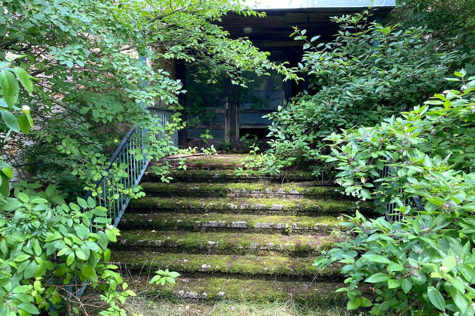 Diese zugewucherte Treppe könnte fast schon wieder romantisch sein.