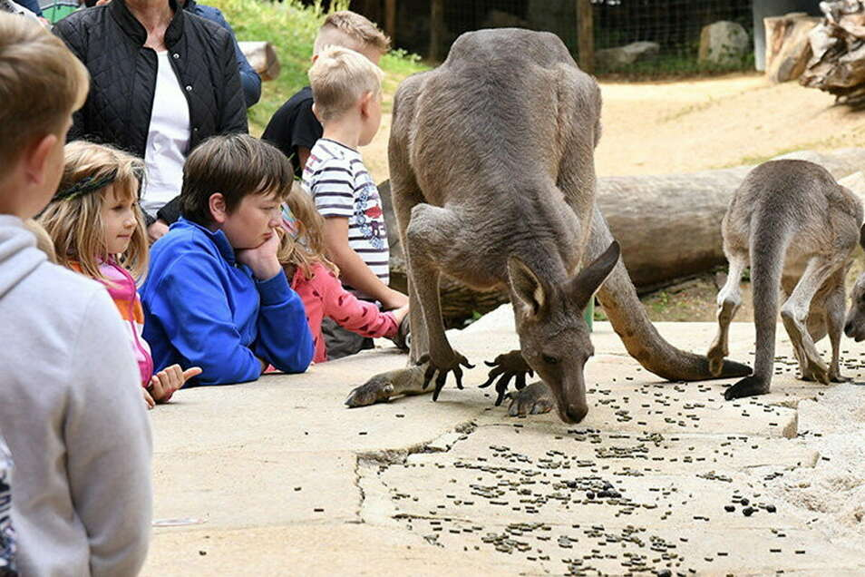 Kinder am Gehege wie bei früheren Tierparkfesten: Das könnte Familien im Lockdown entlasten.