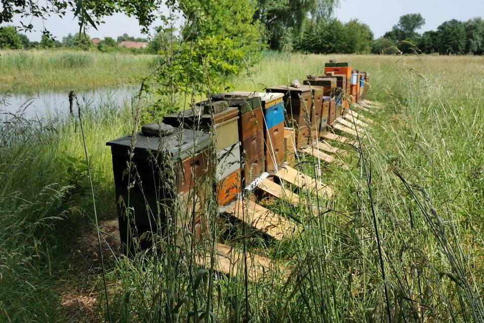 Auch Imkerei gehört für viele Gartenfreunde dazu. Diese Bienenvölker stehen im großzügigen Waldgarten des Wohngutes Richter in Hausdorf.