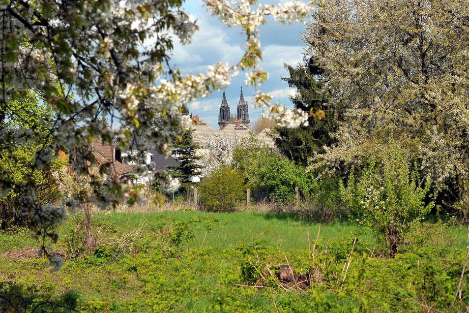 Zum künftigen Baugebiet im Umfeld der Schreberstraße wollen Stadträte genauere Auskünfte vom Rathaus.