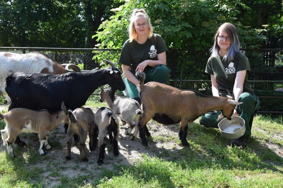 Lisa Siegemund und Korinna Klein (v.l.) sind in vielen Revieren eingesetzt. Hier bei den Huftieren, konkret, den Ziegen.