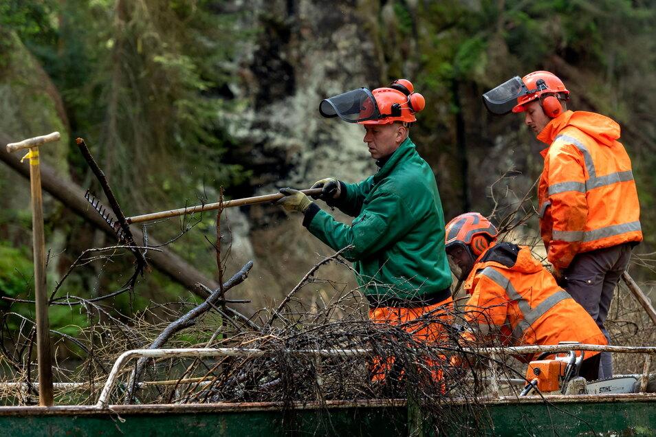Kahnfahrer Jan Tlapak hebt das Reisig aus dem Wasser. Die entasteten Stämme werden an der Reling vertäut und gezogen.