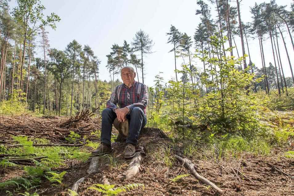 Martin Schimanz aus Kodersdorf besitzt neun Hektar Wald in den Königshainer Bergen nahe der Autobahn. Im Fichtenbestand hat der Borkenkäfer inzwischen ganze Arbeit geleistet.