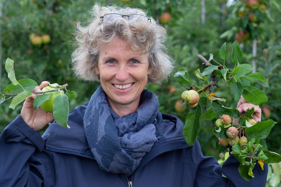 Obst mit Schaden: Die Pflanzenschutzexpertin Ulrike Holz zeigt Äpfel, die von Blutlaus (links) und Mehliger Apfellaus befallen sind. Verkaufen lassen sie sich nicht.