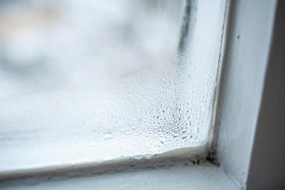 Ein Paradies für Schimmelpilze: Bildet sich am Fenster Kondenswasser, beträgt die Luftfeuchtigkeit in dem Mikroklima dort schon 100 Prozent.