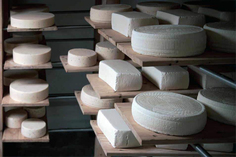 Die frischen Käselaibe reifen in einem extra Raum.