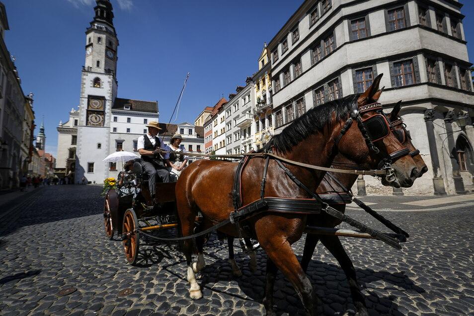 Pferdekutschen sind bei Hochzeitspaaren und Touristen in Görlitz beliebt. Doch wie steht es um das Wohl der Tiere?