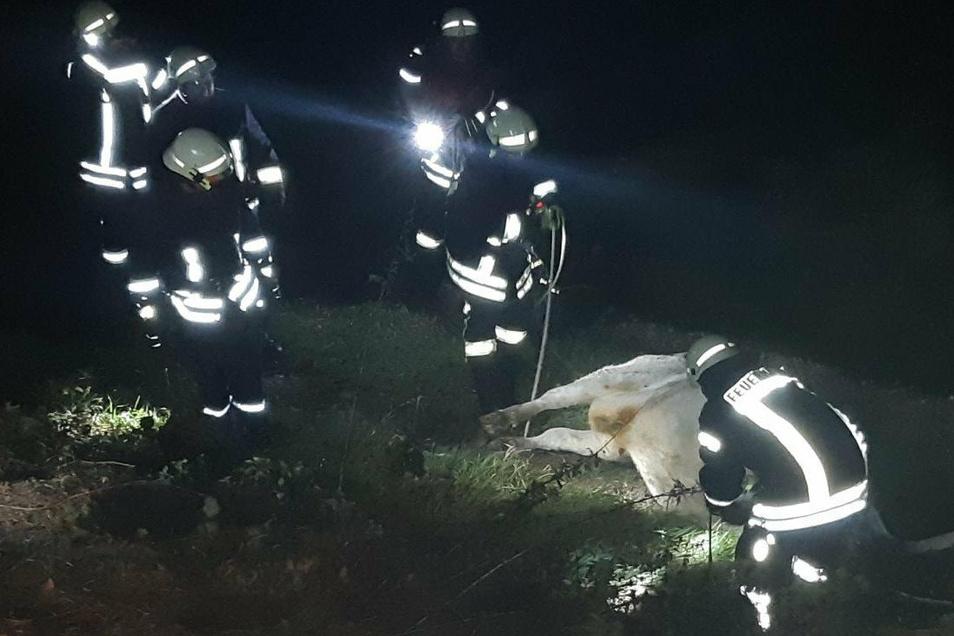 In der Nacht zu Donnerstag ist auf der Bahntrecke zwischen Bautzen und Görlitz ein Zug mit einer Kuh zusammengestoßen.