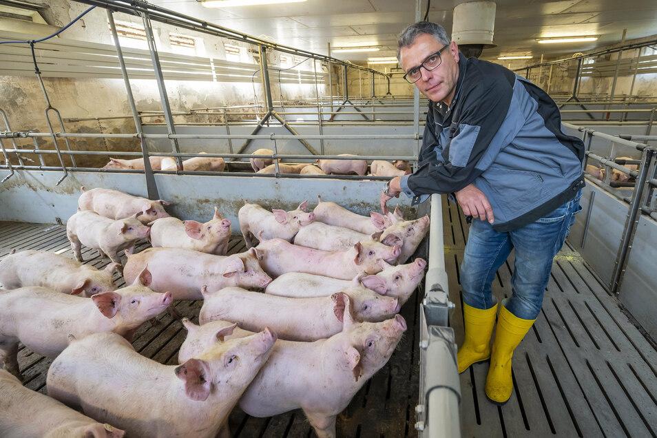 Matthias Döcke ist Vorstand der Herwigsdorfer Genossenschaft Agrofarm. Die Afrikanische Schweinepest stellt seine Branche vor große Probleme.