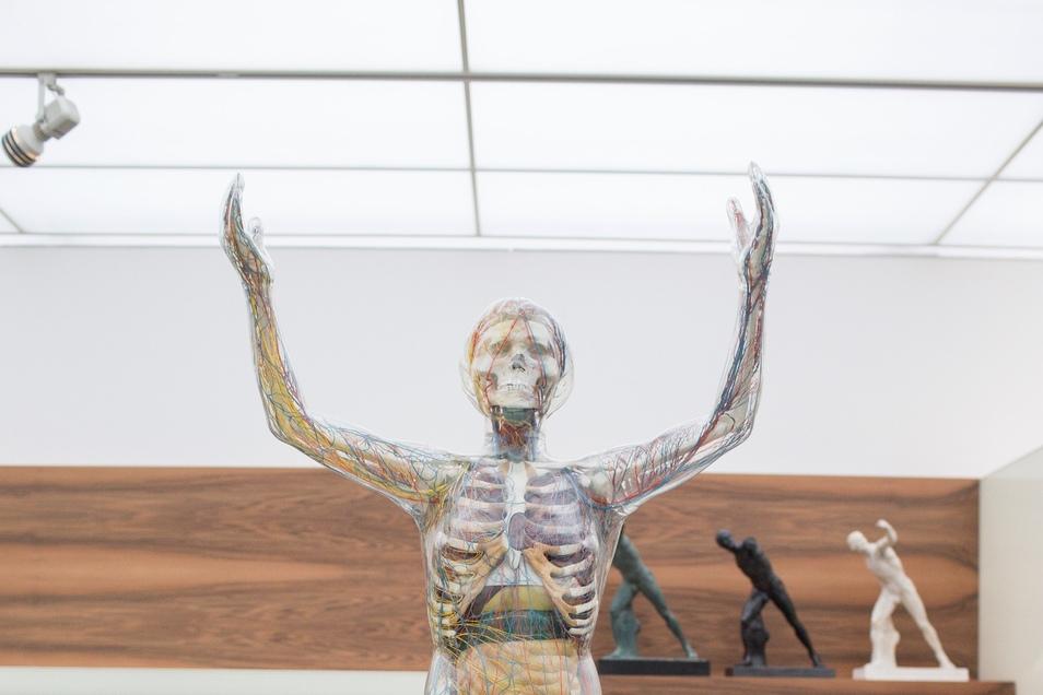 """Mit der """"Gläsernen Frau"""" den Körper kennenlernen."""