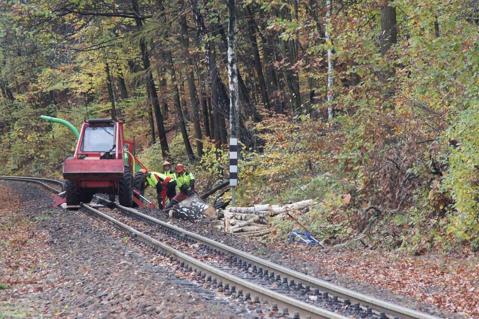Die Soeg beauftragte die Olbersdorfer Firma Spittler an der Eisenbahnstrecke in Niederoybin, während der Betriebspause Bäume zu fällen.