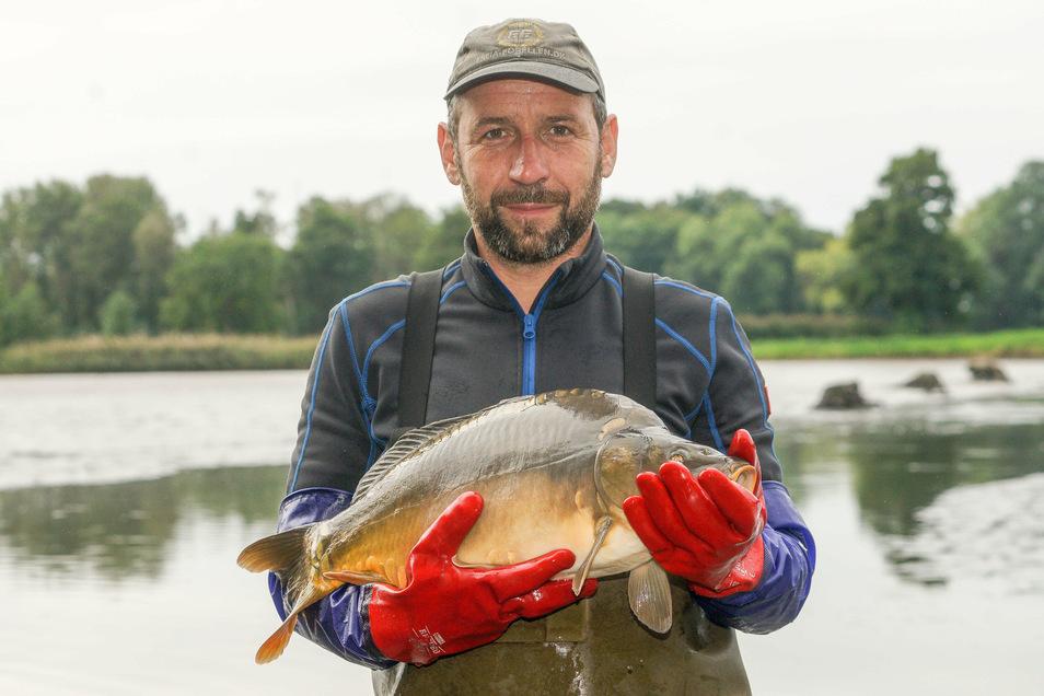 Die Teichwirtschaft Ringpfeil hat schon mit dem Abfischen begonnen. Diesen prächtigen Karpfen holte Karsten Ringpfeil am Freitag aus dem Oberen Bleichenteich bei Wartha.