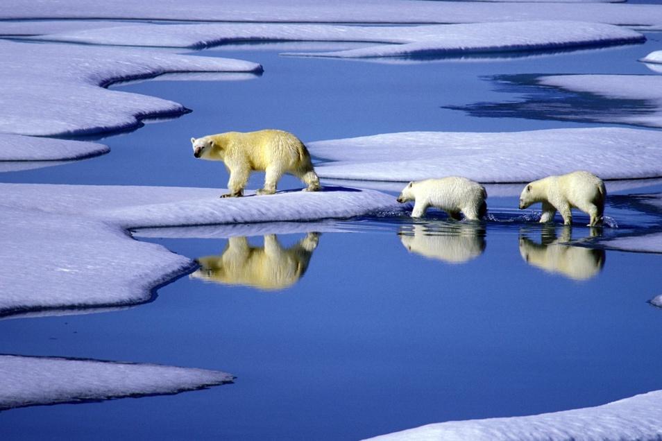 Sogar im Schmelzwasser der abgelegenen Arktis konnten die Wissenschaftler Plastikteilchen nachweisen und analysieren.