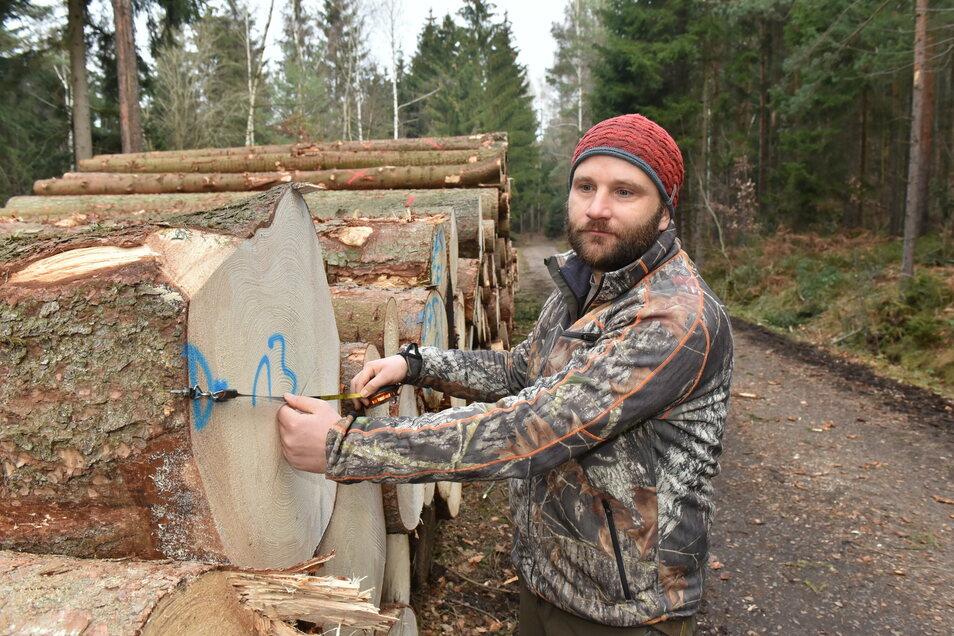 Sägeholz bereit zur Abfuhr: Holzvermesser Philipp Hahn an frisch geschlagenen Stämmen nahe der Nikolsdorfer Wände im Revier Königstein.