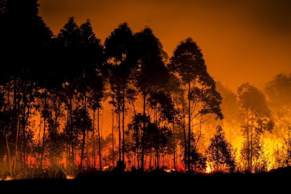 Hitzewellen, Flutkatastrophen, Waldbrände - Die Klimakrise wird spürbar. Deshalb sollte sich auch die Kunst dem Thema widmen, so Holk Freytag.