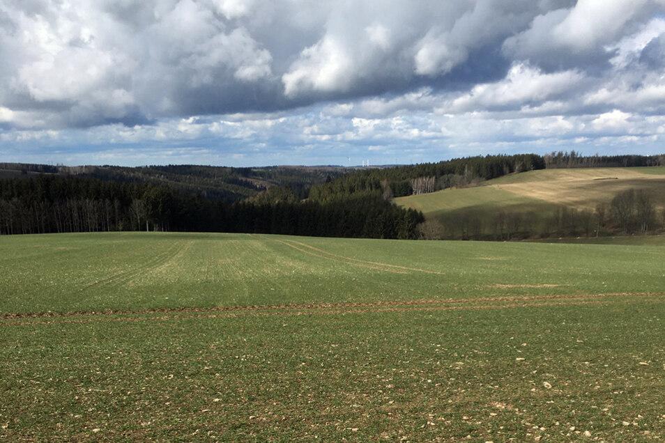 Dieser Ausblick ins Erzgebirge bietet sich auf dem Firstenweg.