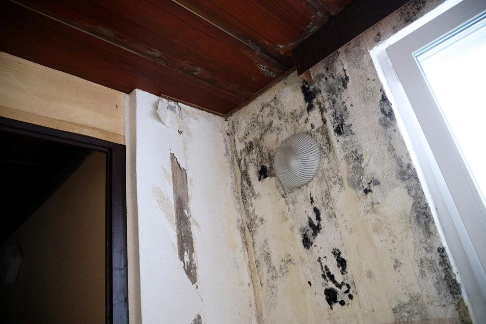 Trotz mehrerer Sanierungsmaßnahmen in den vergangenen Jahren schimmelt es im Eingangsbereich zur Kegelanlage. Bei einem Baumschnitt vor etwa anderthalb Jahren fiel ein großer Ast auf den Zwischenbau und beschädigte das Dach.