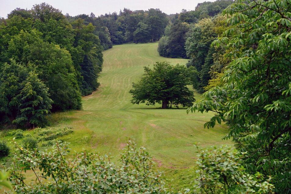 Diese Waldschneise im Schlosspark Ettersburg heißt Pücklerschlag - benannt nach dem Gartenplaner Fürst Hermann von Pückler-Muskau.