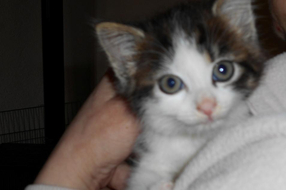 Katzenbaby Mini wird derzeit von Michaela Filla von der Katzeninitiative aufgepäppelt. Es wurde an der Roßweiner Mühlstraße gefunden.