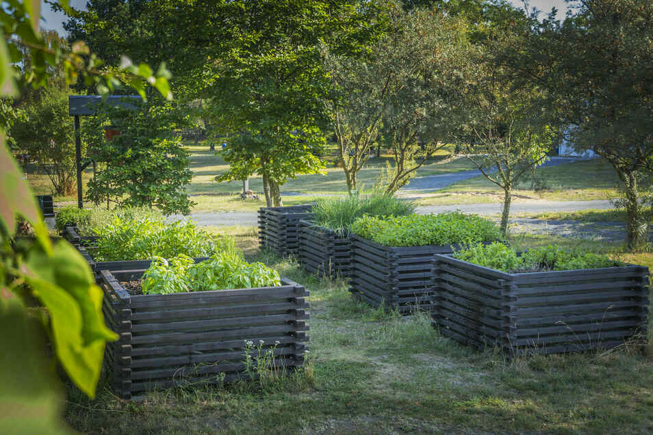 Bohnenkraut, Rosmarin, Petersilie: Ein kleiner Kräutergarten gehört seit drei Jahren zum Campingplatz. Die Gäste dürfen sich bedienen.