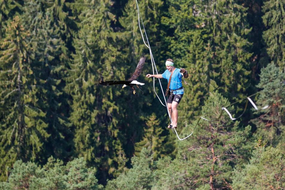 Ruben Langer mit der Weißkopfadlerdame Hera. Sie hatte die Angelschnur als ersten Faden vom Burggarten zur Hocksteinaussicht geflogen.