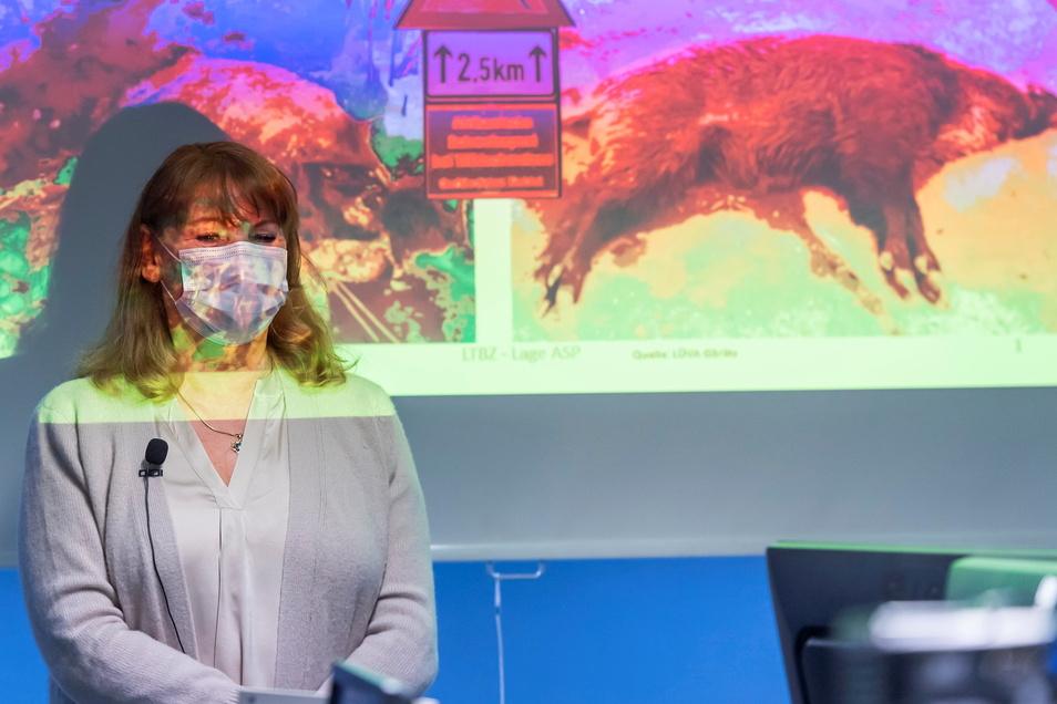 Ministerin vor totem Wildschwein: Eine Projektion im Lagezentrum konfrontierte Sachsens Sozialministerin Petra Köpping (SPD) mit den Auswirkungen der Schweinepest.