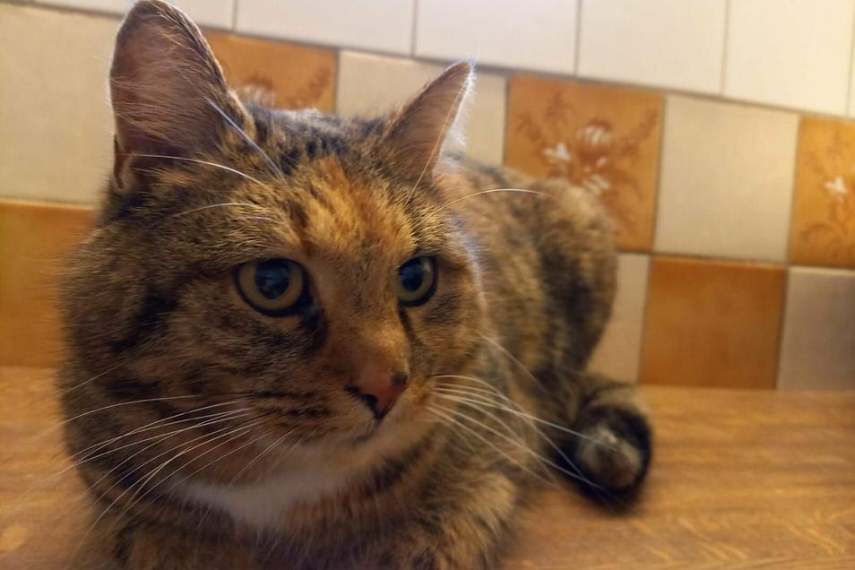 Wer kennt diese Katze, die in Klosterbuch gefunden wurde?