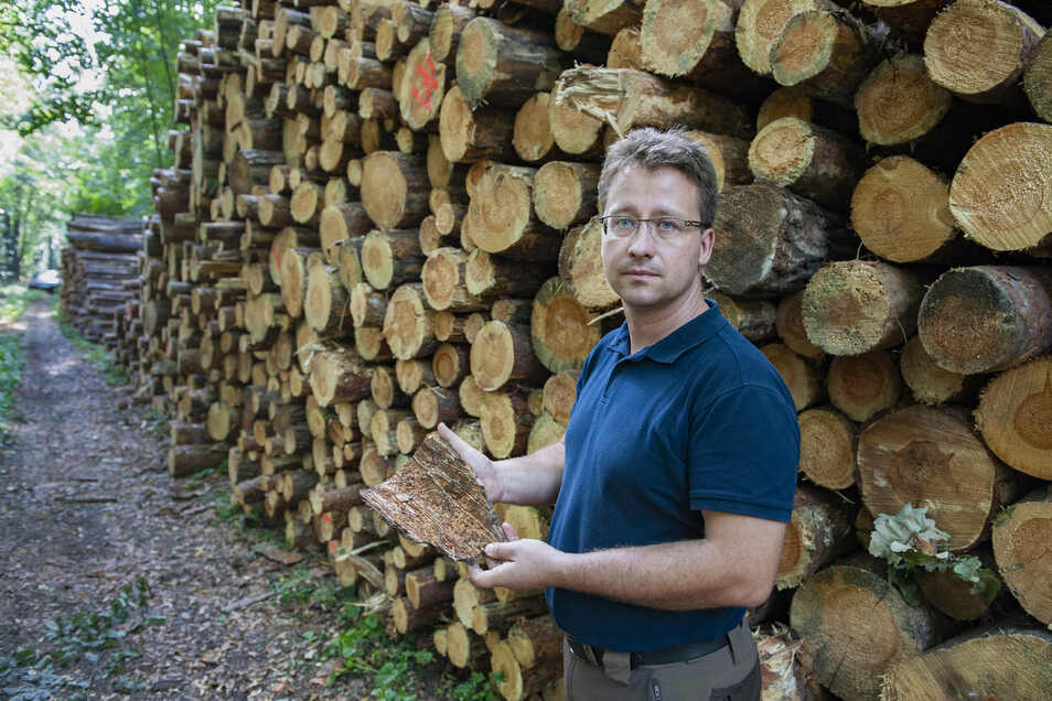 Alexander Decker stellt seinen Forst 50 Waldbesitzern als Trockenlager zur Verfügung. Damit hilft er bei der raschen Beseitigung von Borkenkäferschäden. Dies ist eine vom Freistaat geförderte Maßnahme.