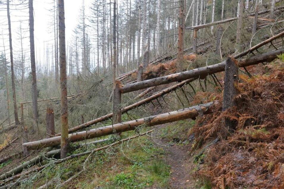 Der Reitsteig ist bereits seit November 2019 zugebrochen und für Wanderer nicht mehr begehbar. Der Bergsteigerbund fürchtet, dass vielen Wegen in der Sächsischen Schweiz das gleiche droht.