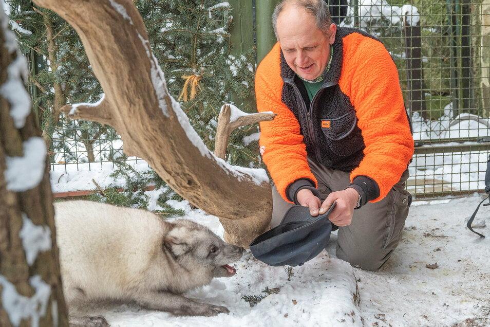 Tierparkleiter Michael Tobis beim Spielen mit Polarfuchs Lasse. Nicht nur den Fuchs machen die Temperaturen nichts aus. Auch die meisten anderen Tierparkbewohner sind hart im Nehmen.