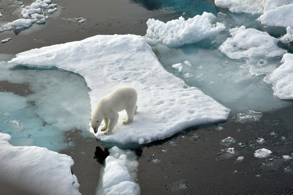 Ein Eisbär steht im Nordpolarmeer auf eine Eisscholle. Auch Eisbären gibt es nicht mehr in allzu großer Zahl.