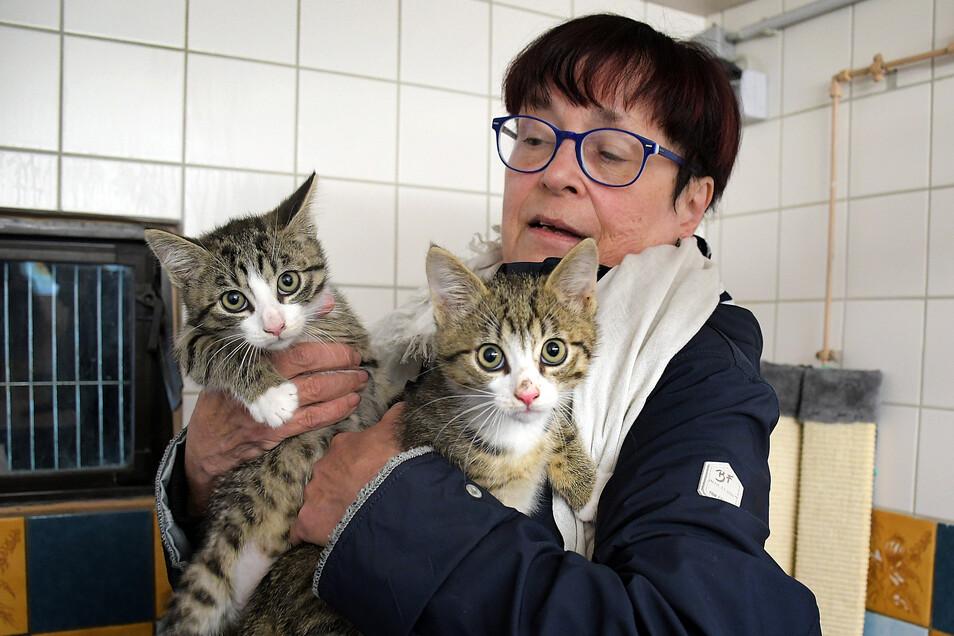 Rosi Pfumfel, Leiterin des Leisniger Tierheims, weist darauf hin, dass sich Haustiere nicht mit dem Coronavirus infizieren können.